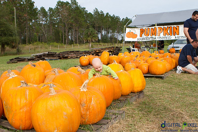 kadence_pumpkin-0017
