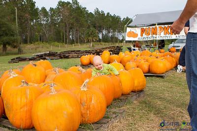 kadence_pumpkin-0018