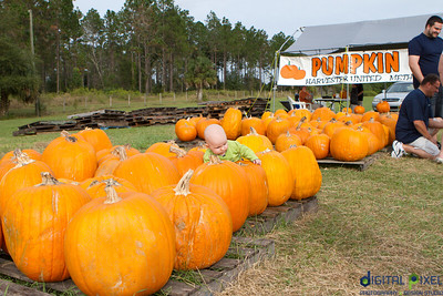 kadence_pumpkin-0019