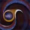 Cosmos IV: SF-BANIRA C