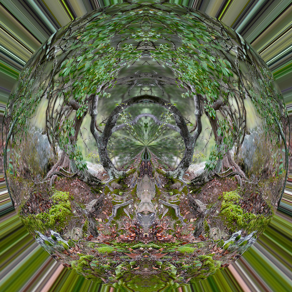 Polarization 36: GARDEN OF THE GODS 1