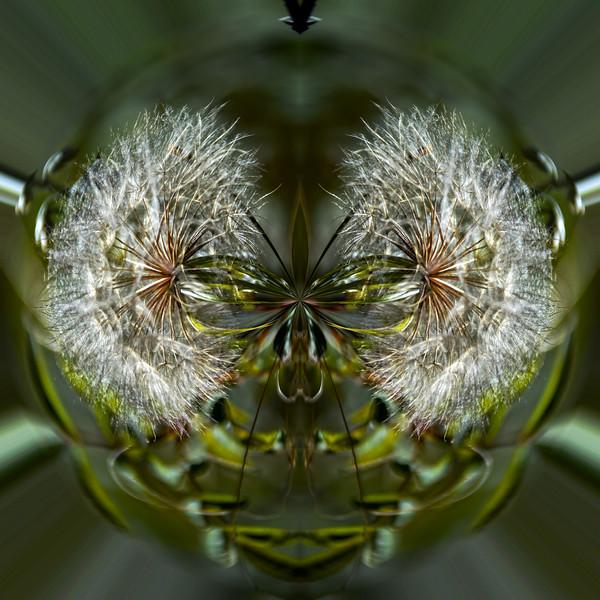 Polarization 221: MEDICINE BOW-1769c