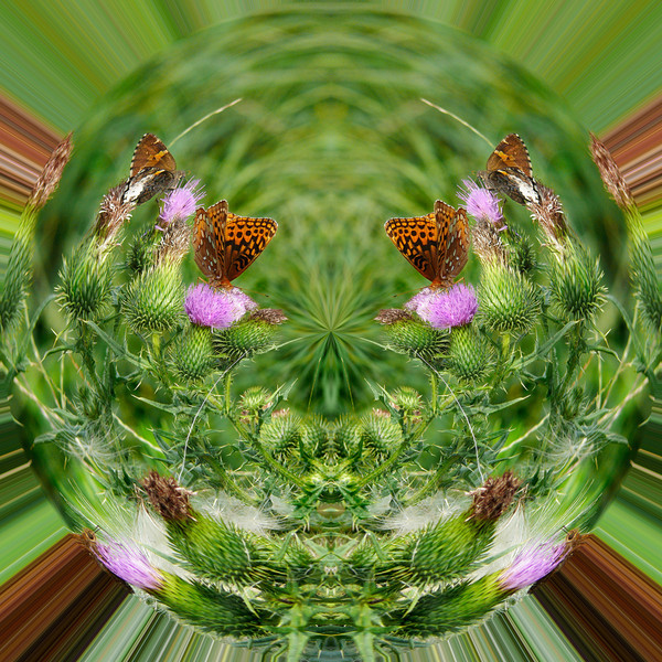 Polarization 129: BUTTERFLY 507c