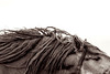 "Kimerlee Curyl     ""Bed Head""     Archival Eco-Friendly Sugar Cane Print w:White Box Frame    30x45    $4,650 00"