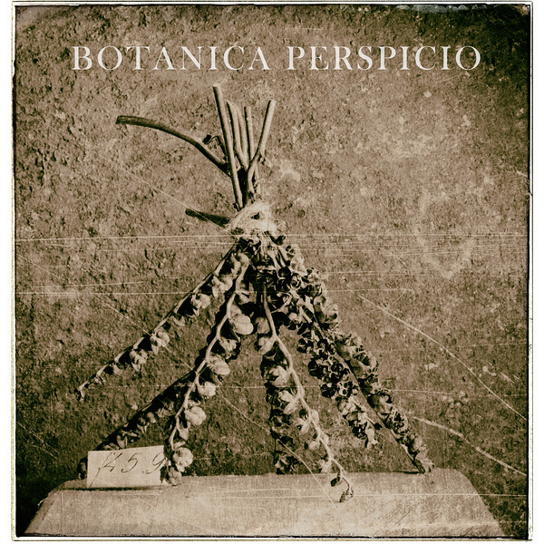 Botanical Perspicio Cover (Veronica)