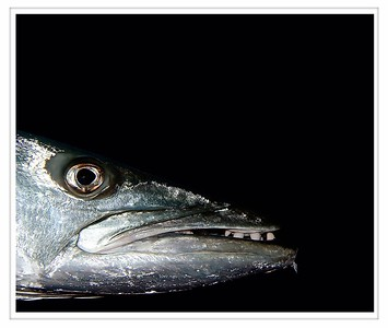 "Barracuda - ""Yeah that's right, I have a goatee."""