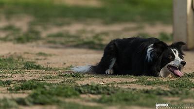 #laurelcanyondogpark #dogpark #dogphotography #garyrosephotography