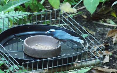 This little bird seems to be quite happy in the glass house
