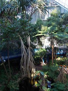 Mangrove like palm