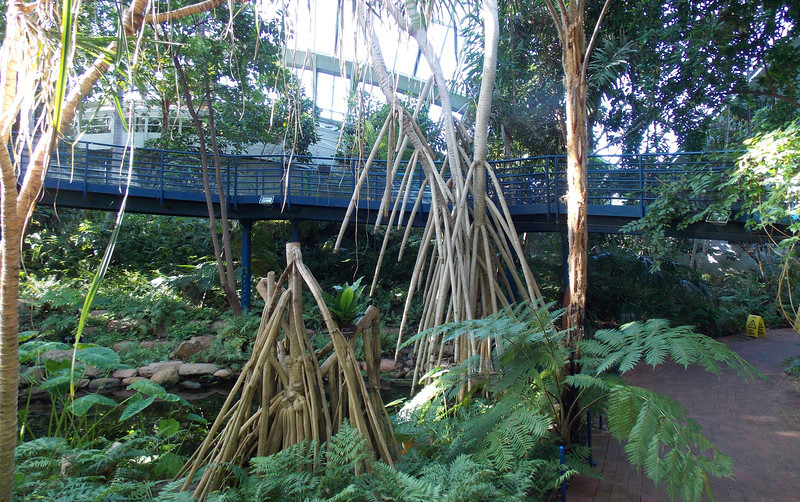 These were taken in side the Bicentennial Conservatory