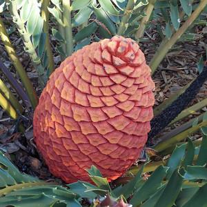 Looks like a giant pineapple