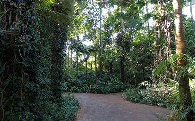 It is home to many endangered rainforest plants