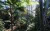 The variety of palms and ferns is quite amazing