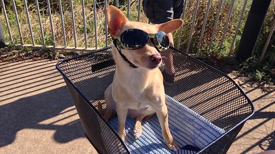 They call then Doggles