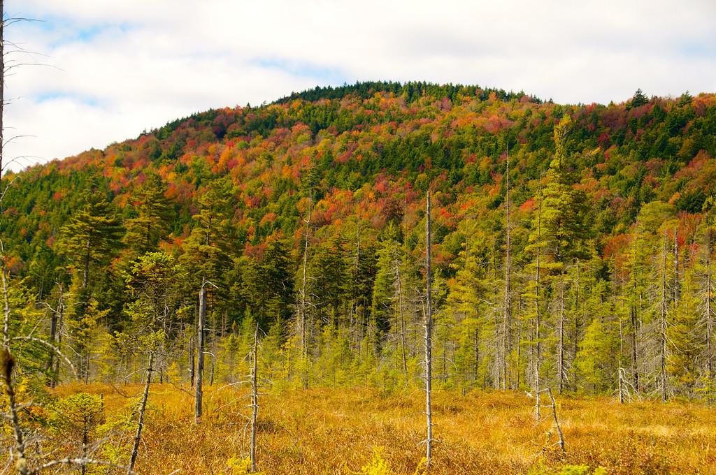 Autumn Bog