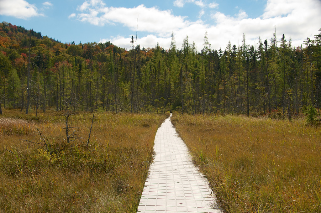 Path in the Bog