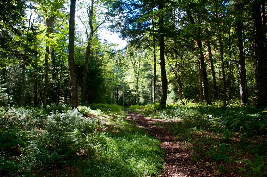 Trail to Big Stafford Po d