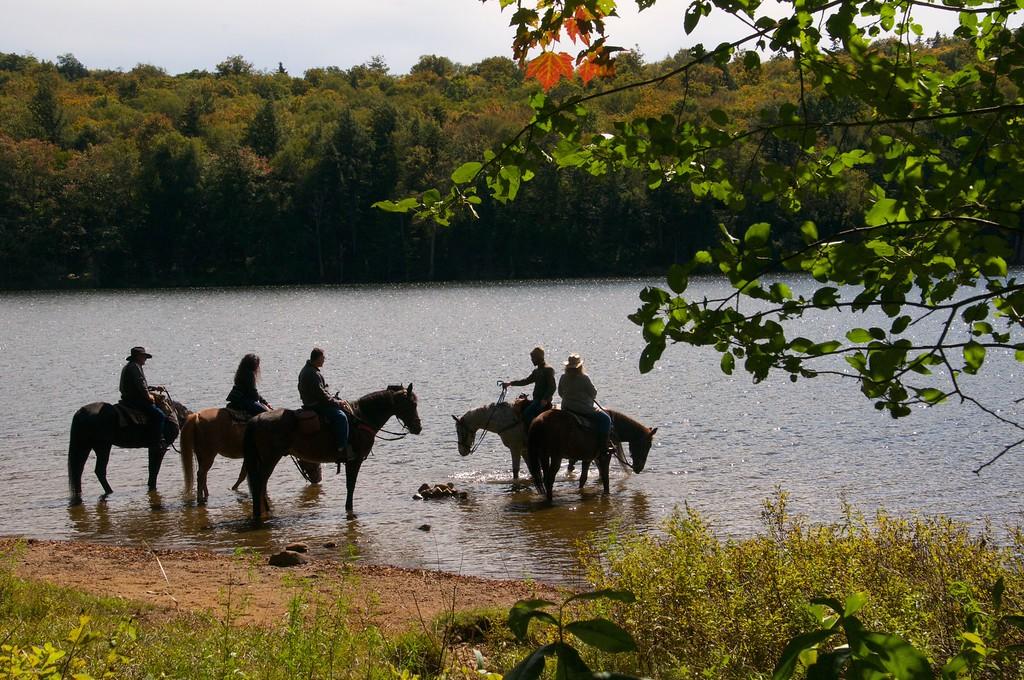 Horses on Cascade Lake