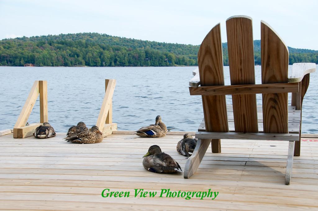 Ducks on the Dock