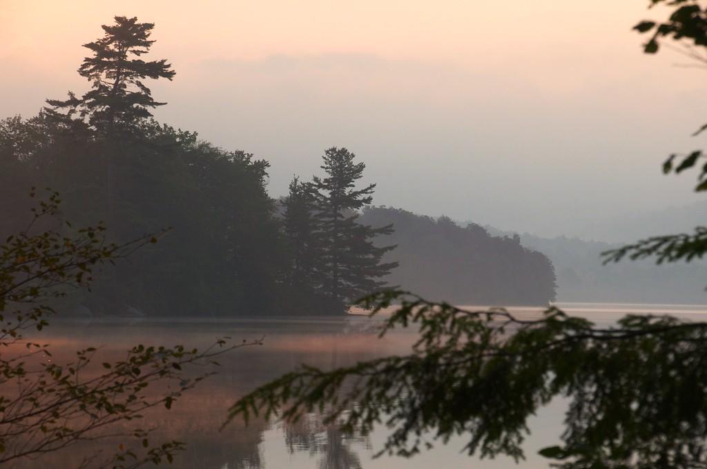 Framed Morning Pine - Limekiln Lake