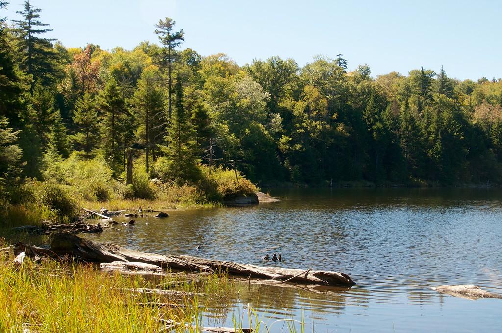 Razorback Pond
