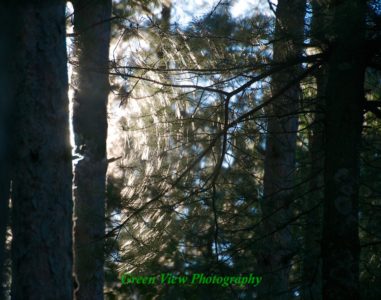Spider Web Highlights