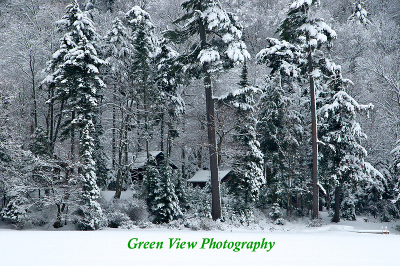 Winter Cabins in the trees