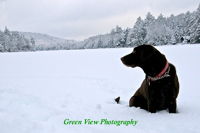 Winter View - Same dog looking down Twitchell Lake as in the Twitchell Scenery gallery.