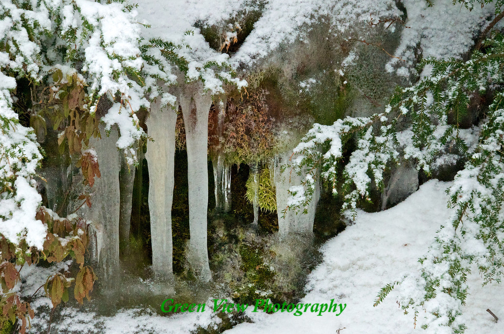 Icicles around the pines