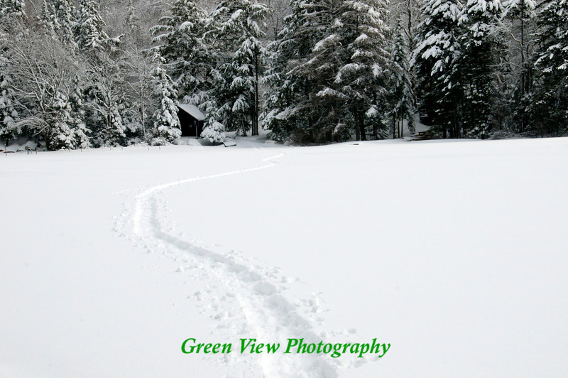 Snow Shoe tracks on the lake