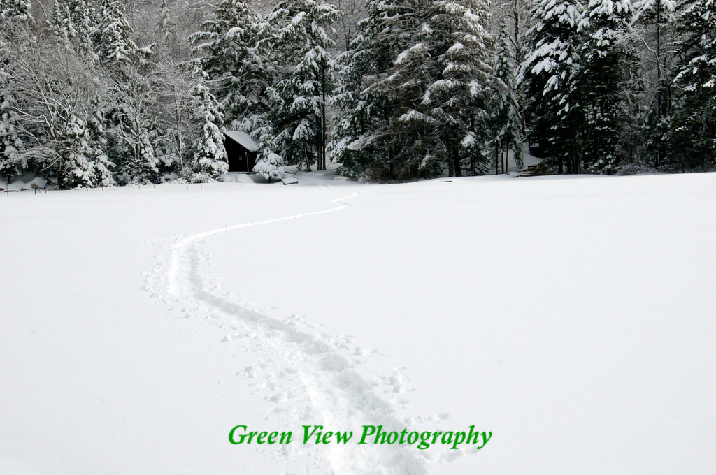 Snow Shoe tracks on the lake