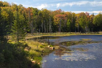 Pond between Indian Lake and Speculator