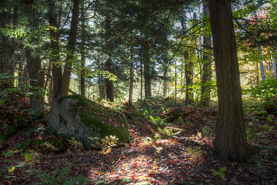 Woodland near Old Forge