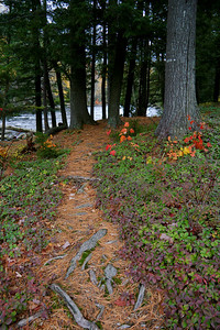 Trail near Forked Lake