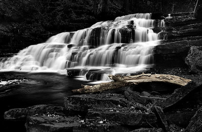 12- A Fallen Tree in Beecher Creek Waterfalls
