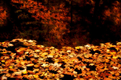 4- Fallen leaves on small pond