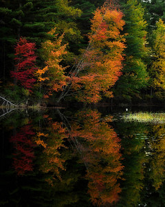 9- Mirror reflection of autumn trees, Adirondacks.