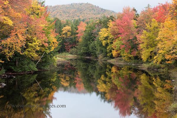 Recent Additions- Autumn Images