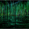 Adirondacks Cedar River Flow Reeds 5 September 24 2016
