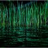 Adirondacks Cedar River Flow Reeds 5 September 24 2016
