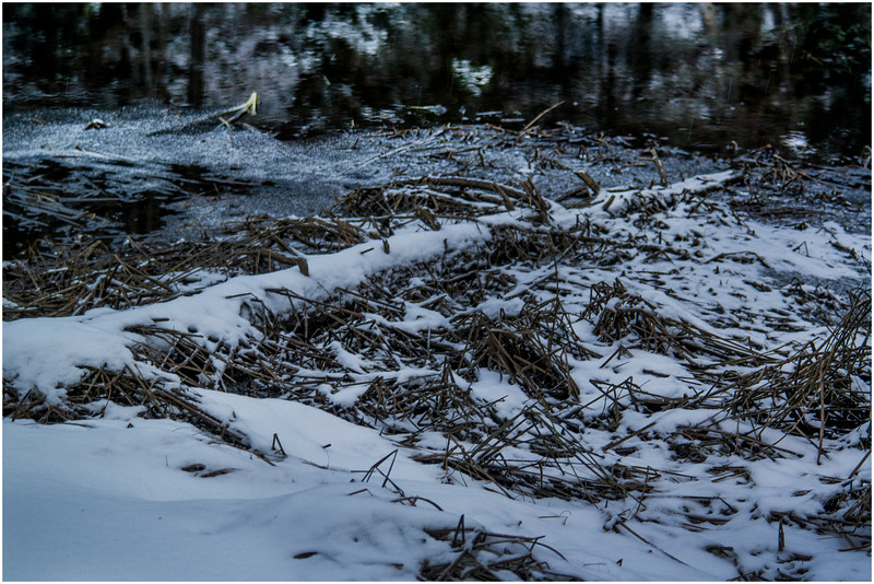 Adirondacks Indian Lake Raquette Brook Deadfall 2 December 2016