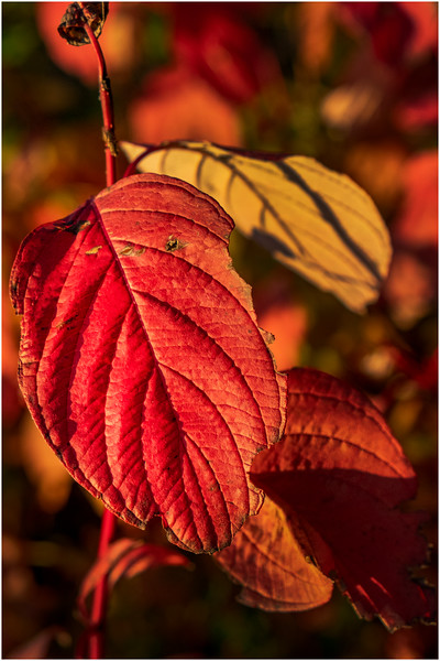 Adirondacks Forked Lake Leaves 5 October 2019