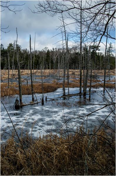 Adirondacks Lake Durant November 2015 Frozen Pond 12