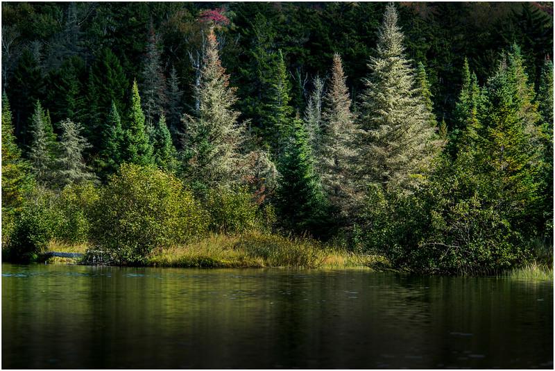 Adirondacks Cedar River Flow Shoreline 7 September 24 2016