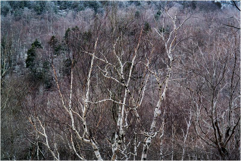 Adirondacks Keene November 2015 Cascade Pass Trees 3
