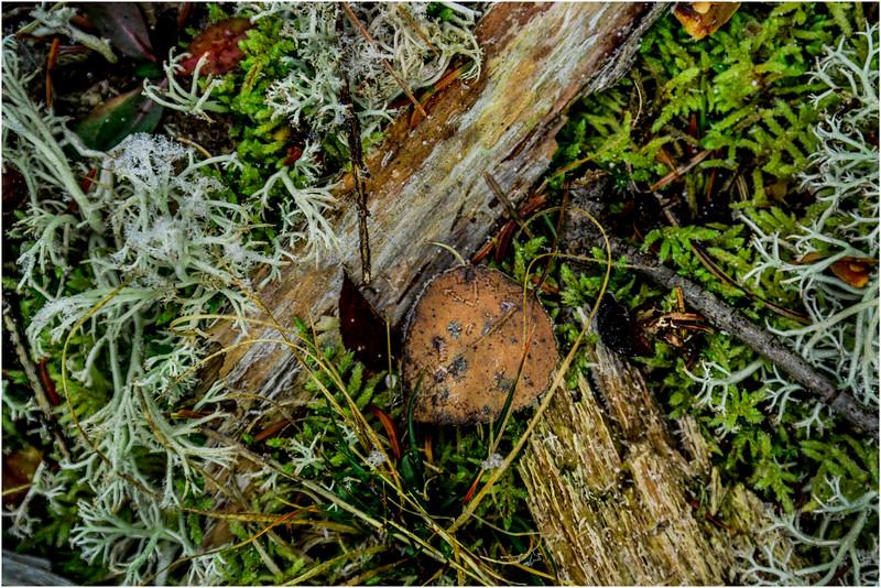 Adirondacks Long Lake November 2015 Forest Floor 3