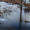 Adirondacks Lake Durant November 2015 Frozen Pond 1
