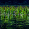 Adirondacks Cedar River Flow Reeds 9 September 24 2016