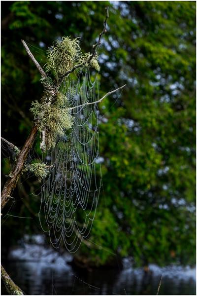 Adirondacks Newcomb Lake Spider Web 9 July 2017