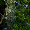 Adirondacks Newcomb Lake Spider Web 9 July 2017